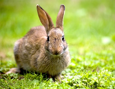 DPS adjudication case study: Rabbits and a 'disappearing' lawn mystery