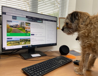 Dog tired of working from home say Winkworth, Stacks and CJ Hole