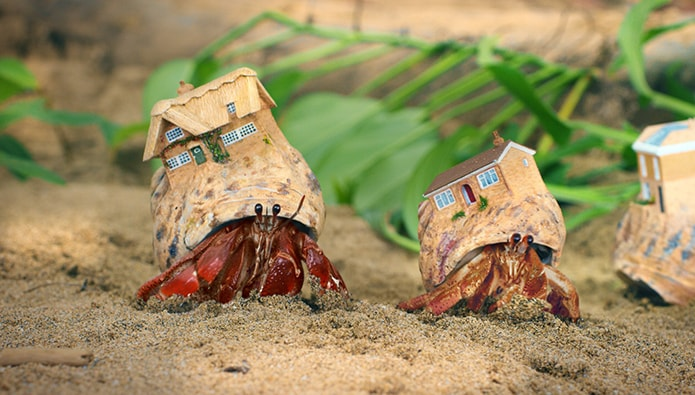 Zoopla gets it claws out with new Crab-theme advertising campaign